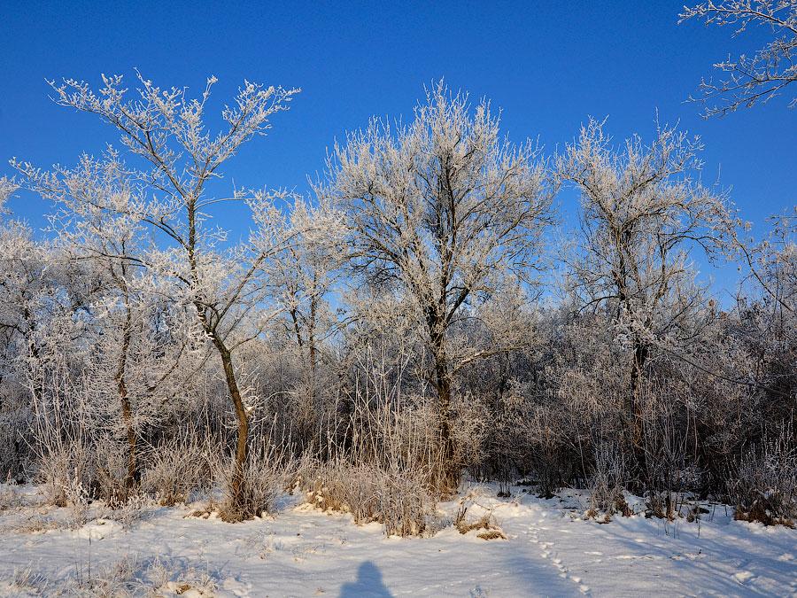 Зима в Приднестровье