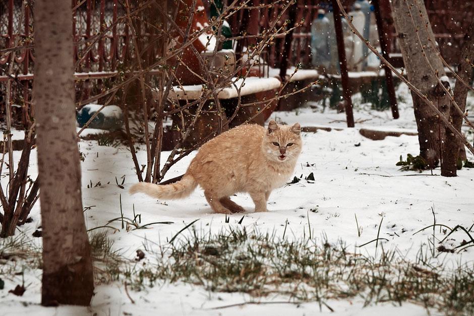 Март 2013 года - в Молдавии идет снег