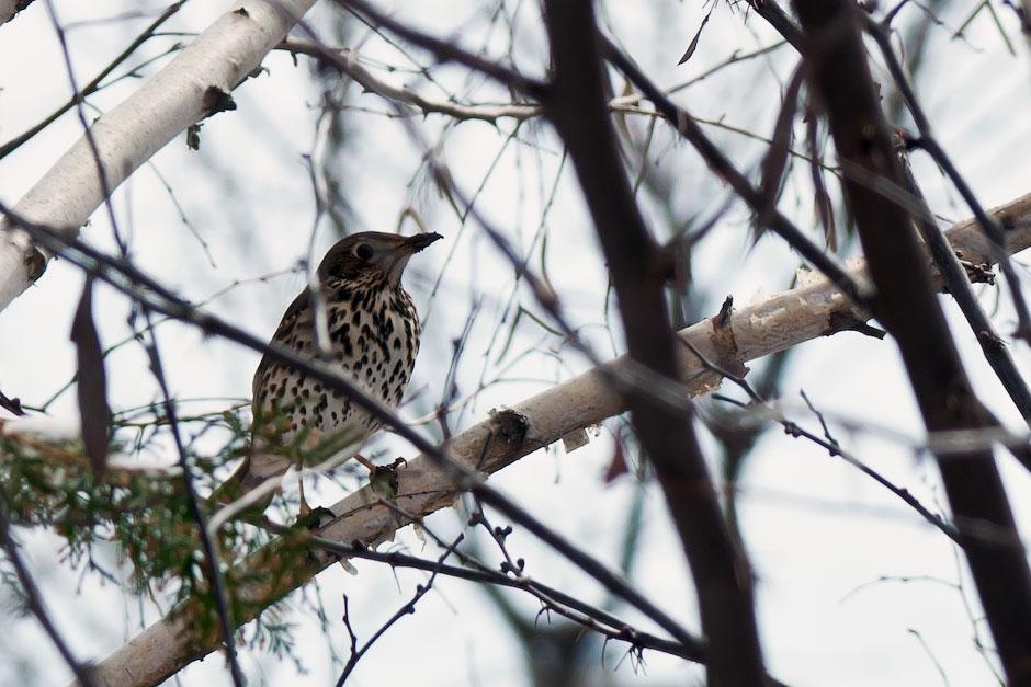 Загадочная птичка в Молдавии