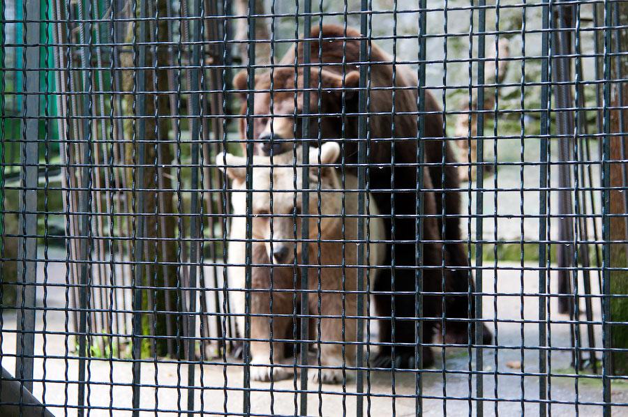 """Зоопарк """"Сказка"""" - Крым, Ялта, 24 мая 2013 года (6)"""