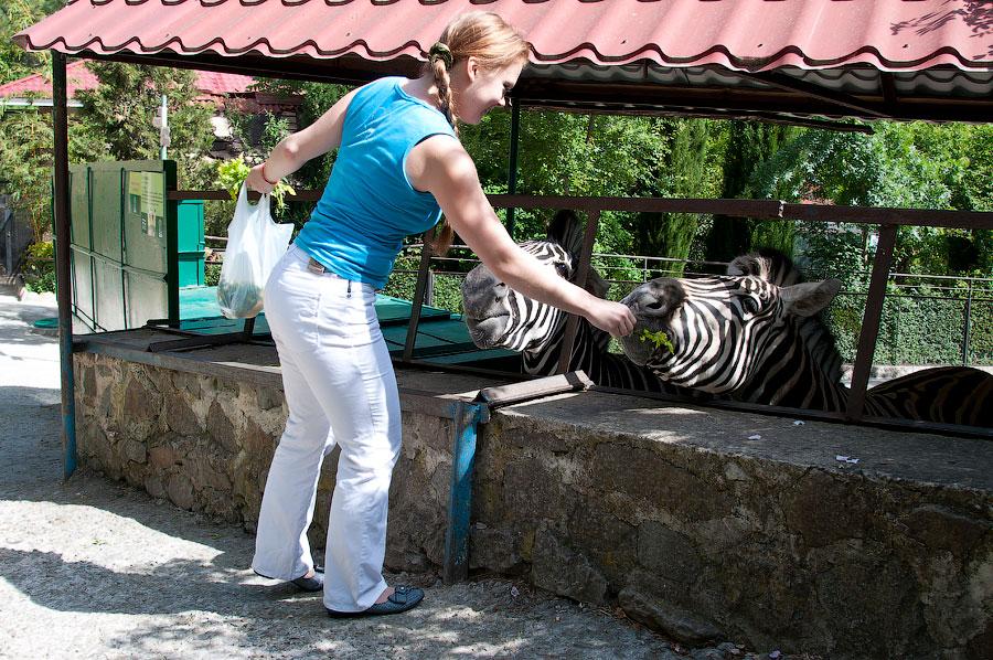 """Зоопарк """"Сказка"""" - Крым, Ялта, 24 мая 2013 года (15)"""