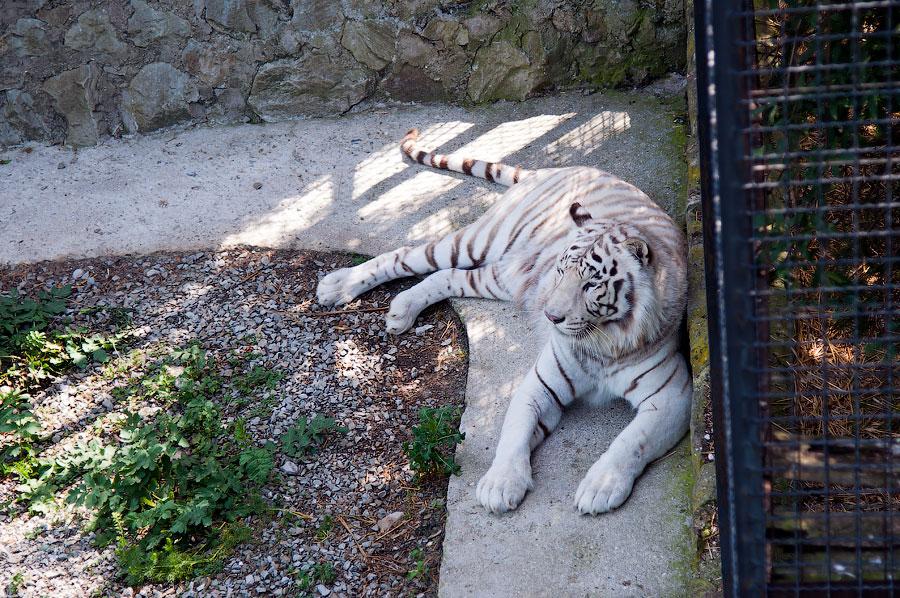 """Зоопарк """"Сказка"""" - Крым, Ялта, 24 мая 2013 года (17)"""