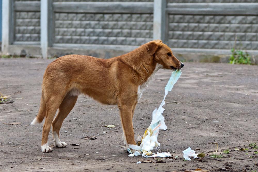 Кошки, собаки и проблема бездомных животных (3)