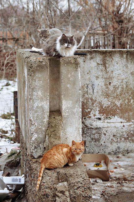 Кошки, собаки и проблема бездомных животных (6)