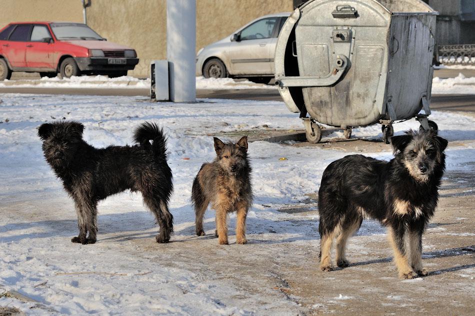 Кошки, собаки и проблема бездомных животных (8)