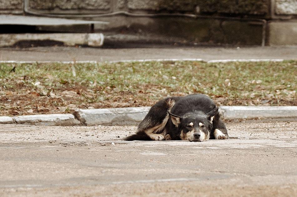 Кошки, собаки и проблема бездомных животных (9)
