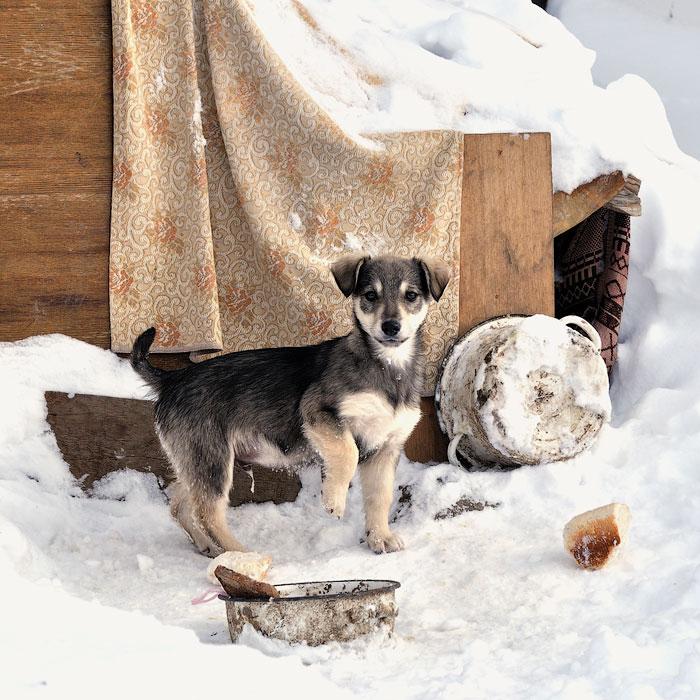 Кошки, собаки и проблема бездомных животных (12)