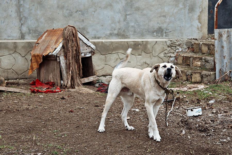 Кошки, собаки и проблема бездомных животных (13)