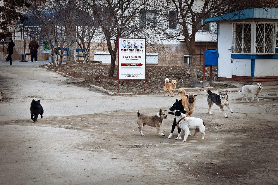 Кошки, собаки и проблема бездомных животных (17)