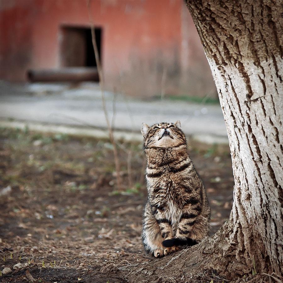 Кошки, собаки и проблема бездомных животных (14)