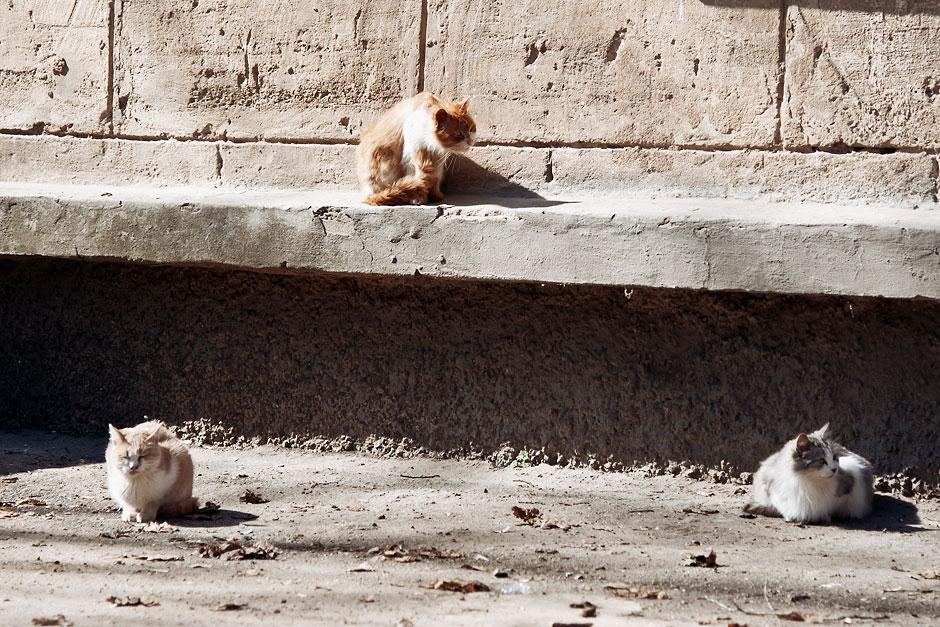 Кошки, собаки и проблема бездомных животных (19)