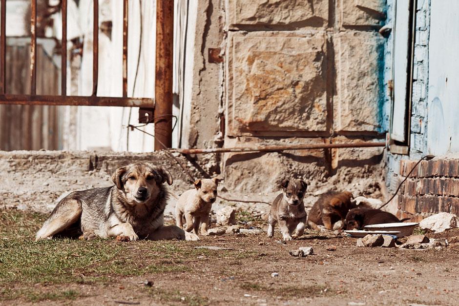 Кошки, собаки и проблема бездомных животных (24)
