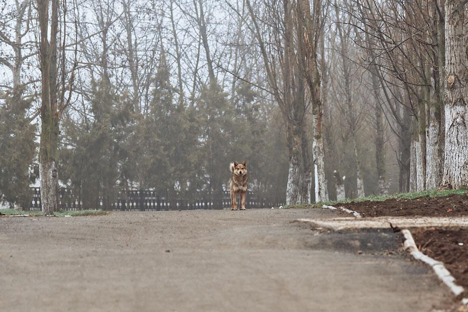 Кошки, собаки и проблема бездомных животных (26)