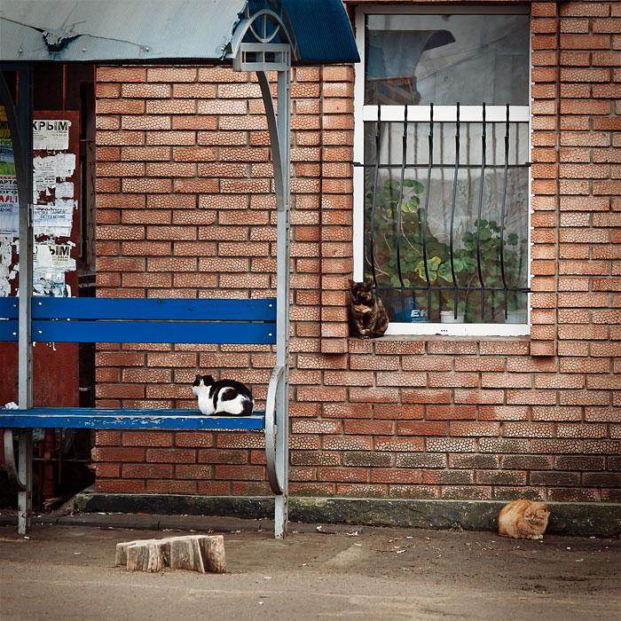 Кошки, собаки и проблема бездомных животных (25)