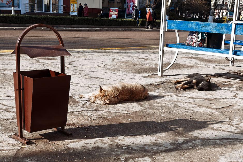 Кошки, собаки и проблема бездомных животных (32)