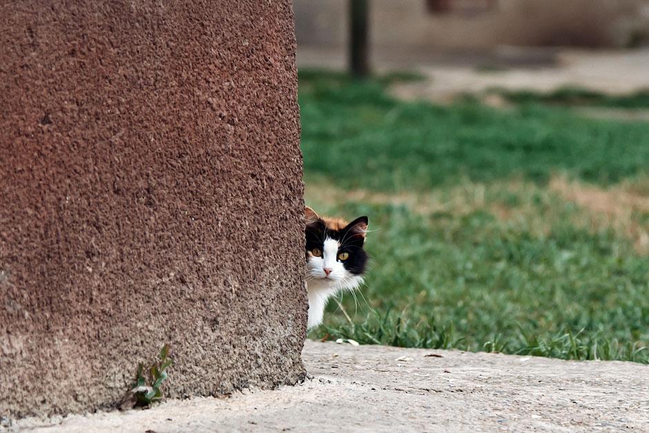 Кошки, собаки и проблема бездомных животных (37)