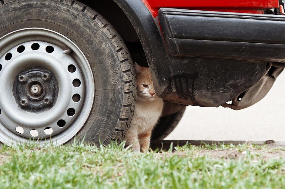 Кошки, собаки и проблема бездомных животных (36)