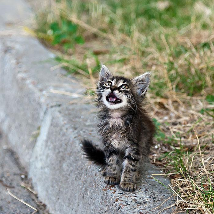 Маленький котёнок в Тирасполе ищет хозяина