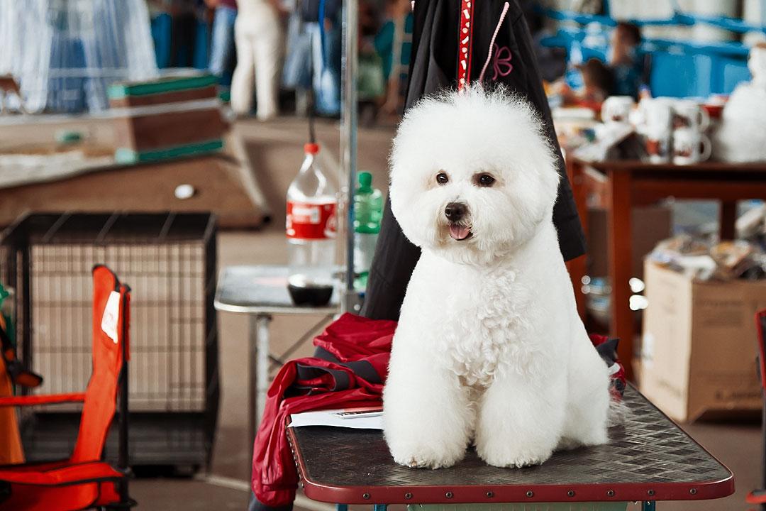 Международная выставка собак в Тирасполе - 8 сентября 2013 года (1)