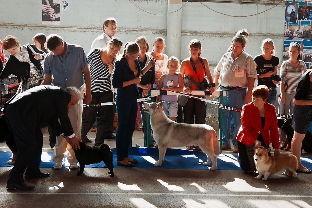 Международная выставка собак в Тирасполе - 8 сентября 2013 года (6)