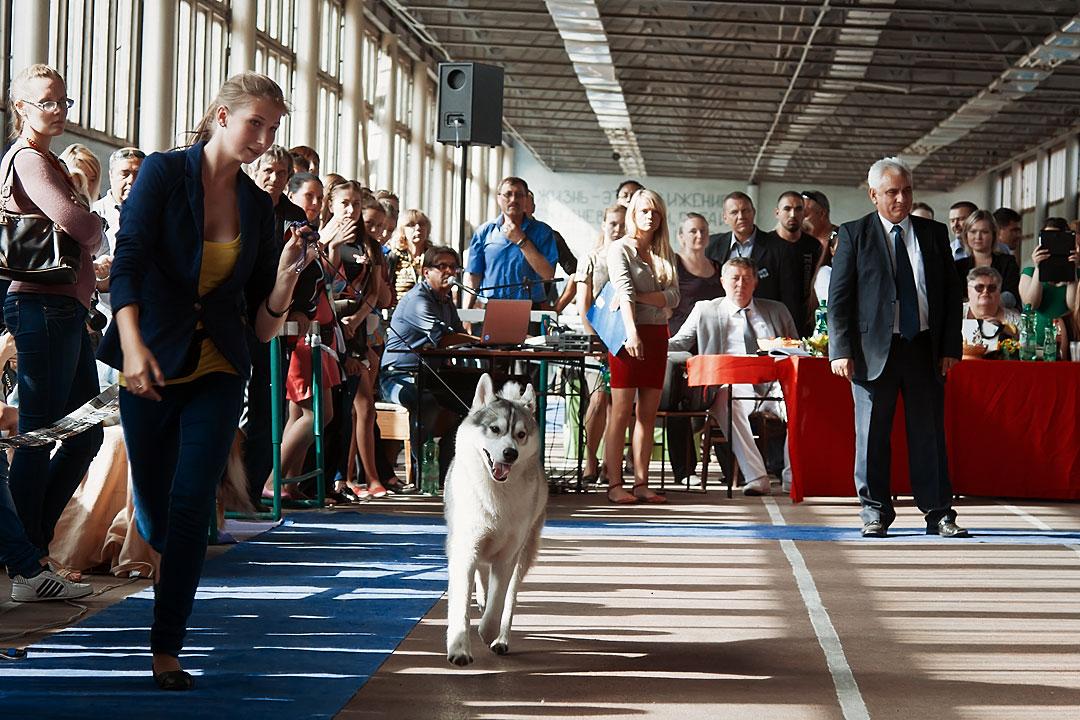 Международная выставка собак в Тирасполе - 8 сентября 2013 года (7)