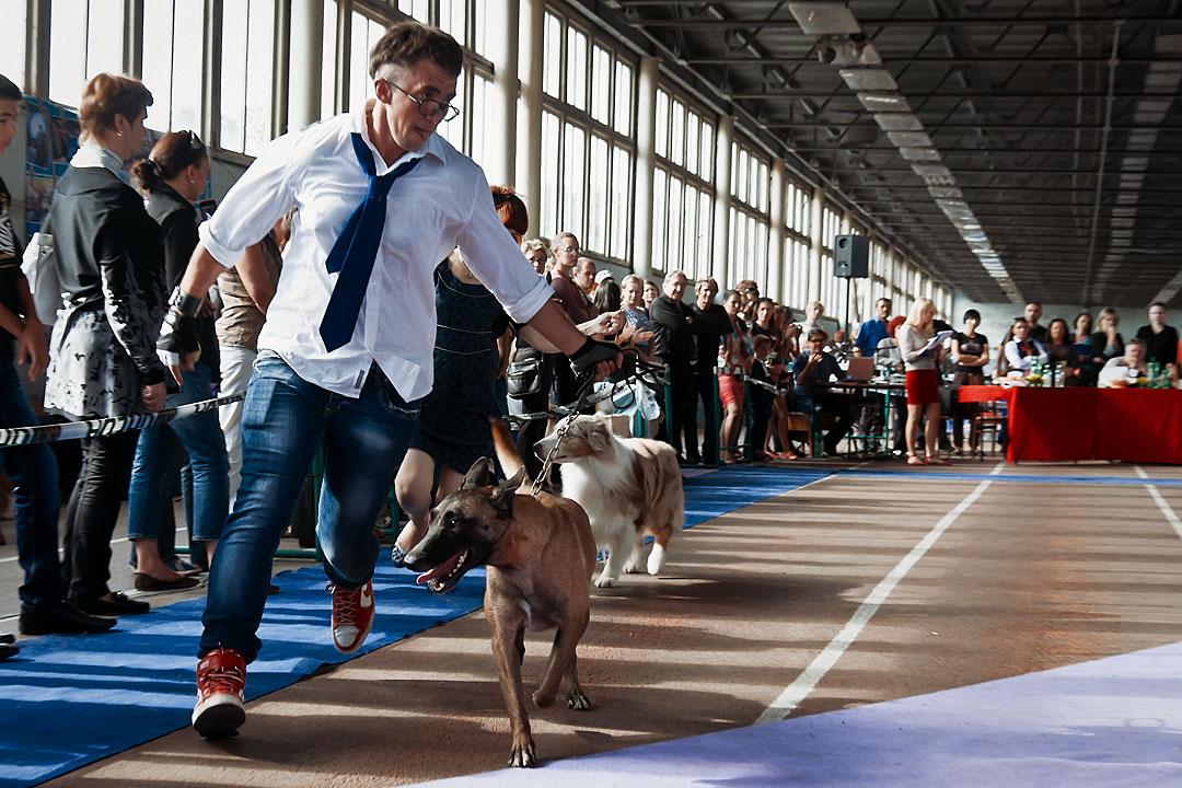 Международная выставка собак в Тирасполе - 8 сентября 2013 года (12)
