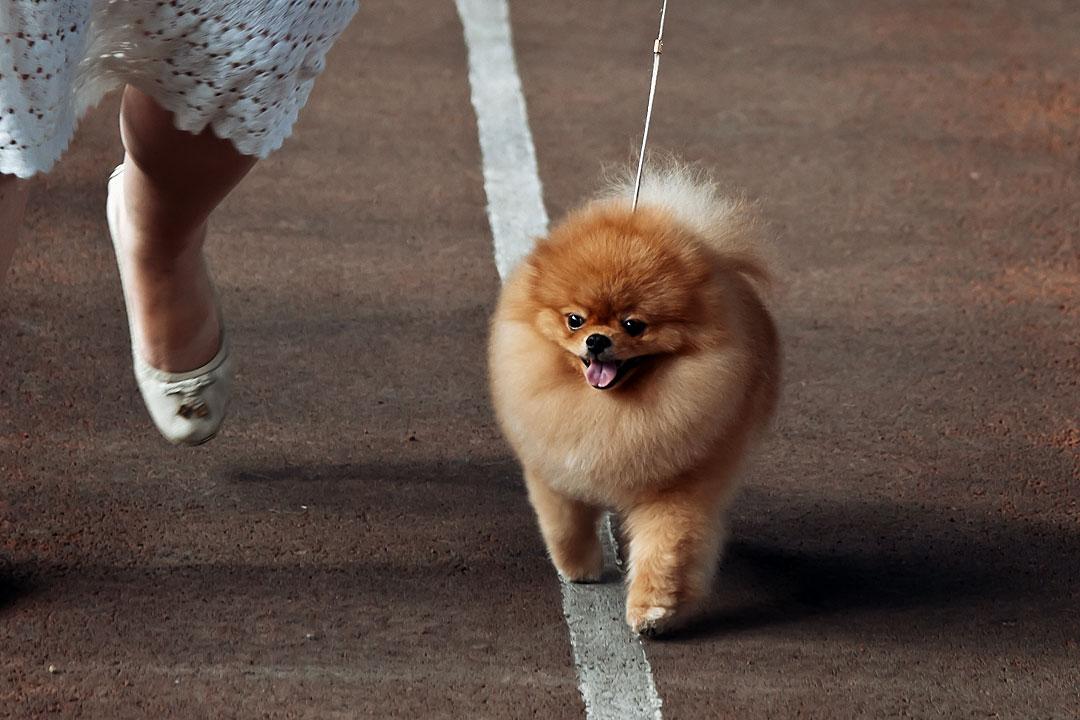 Международная выставка собак в Тирасполе - 8 сентября 2013 года (17)