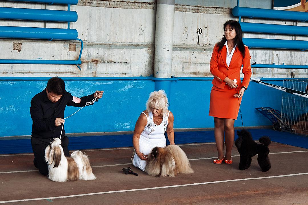Международная выставка собак в Тирасполе - 8 сентября 2013 года (20)