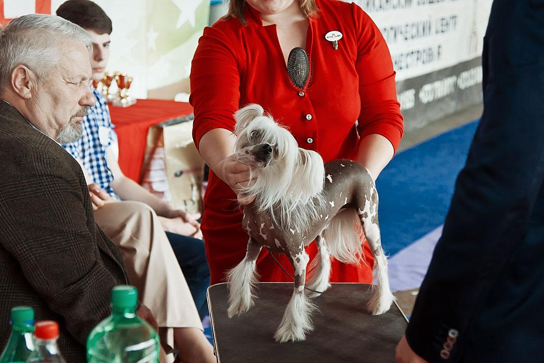 Международная выставка собак в Тирасполе - 8 сентября 2013 года (21)