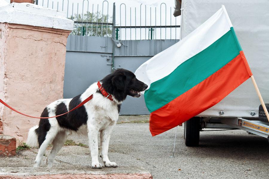 выставка собак в Тирасполе - 15 сентября 2013 года (6)