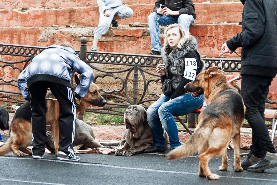 выставка собак в Тирасполе - 15 сентября 2013 года (7)