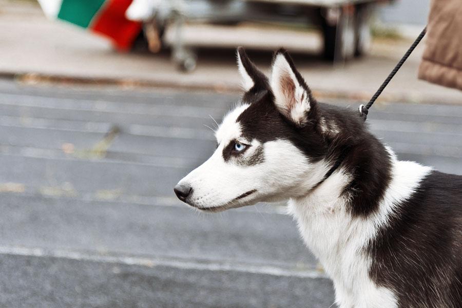 выставка собак в Тирасполе - 15 сентября 2013 года (12)