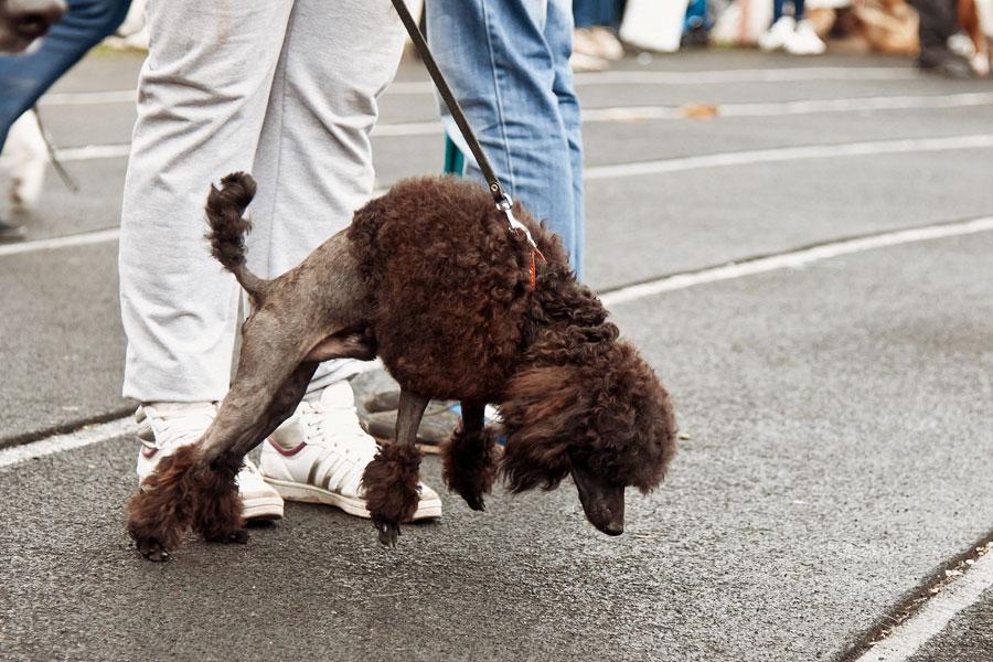 выставка собак в Тирасполе - 15 сентября 2013 года (17)