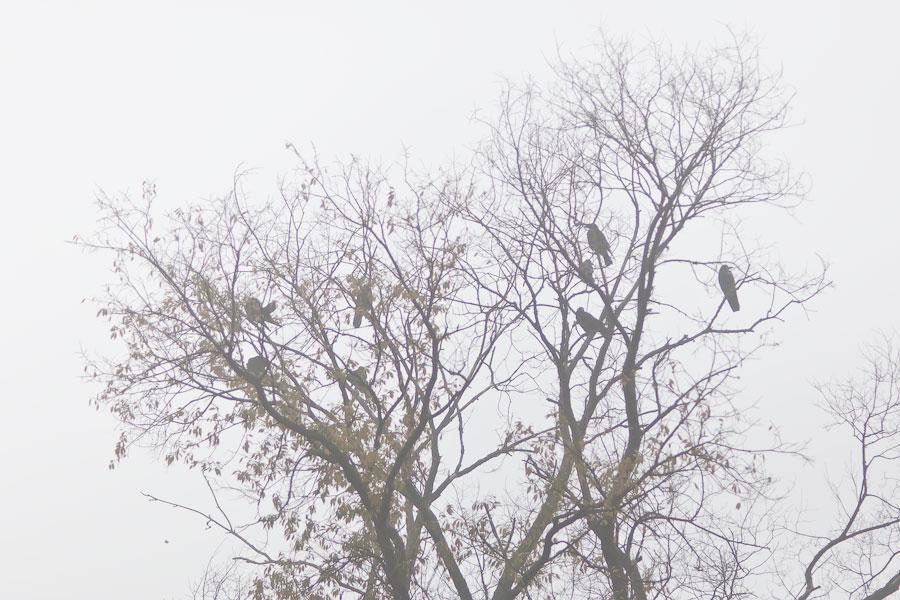 Туманное утро в Тирасполе