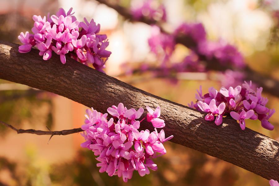В Приднестровье пришла весна