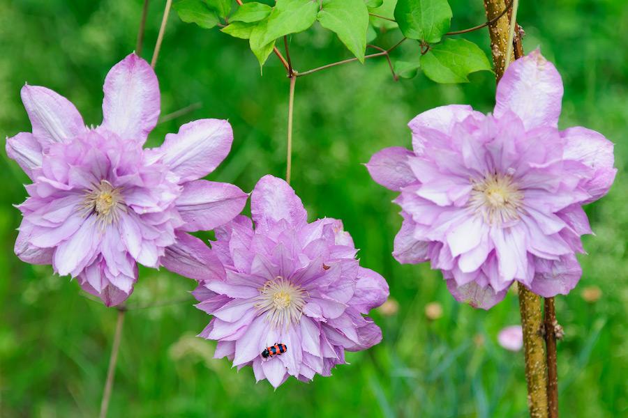 Весенним утром в огороде - какие-то неизвестные цветы