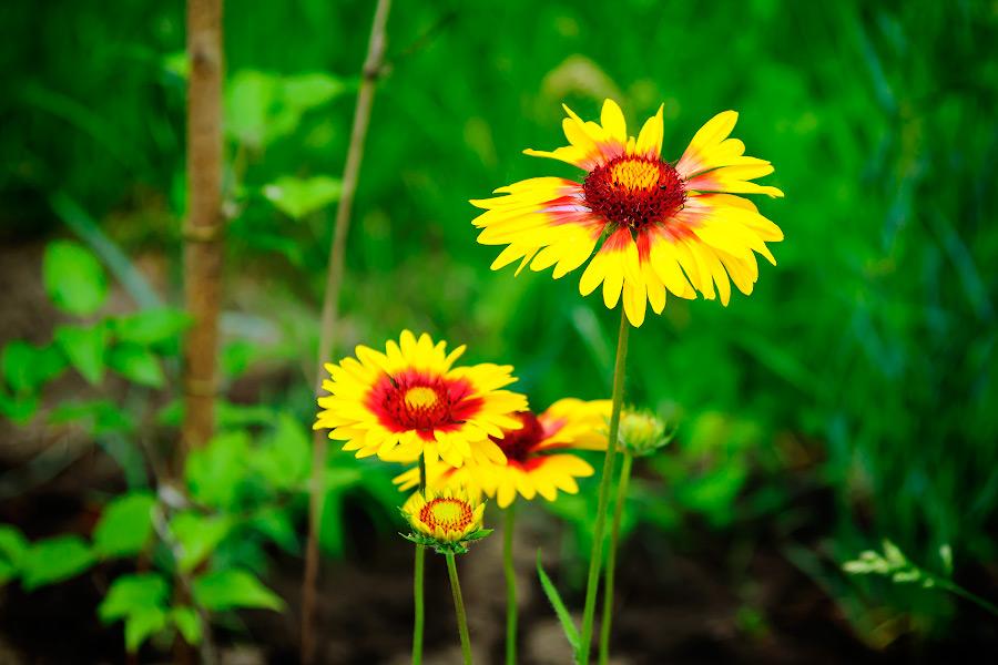 Весенним утром в огороде - опять цветы
