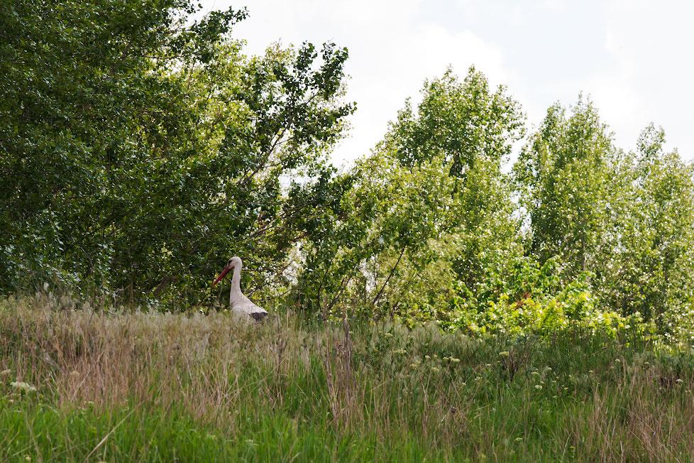 Аист в селе Терновка (1)