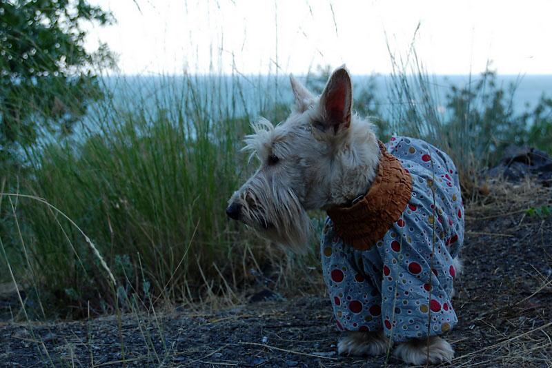 Собака Айка в Крыму