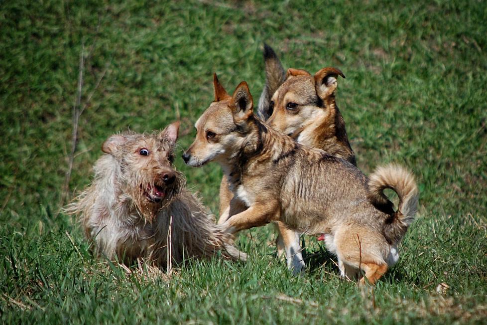 Собачьи радости