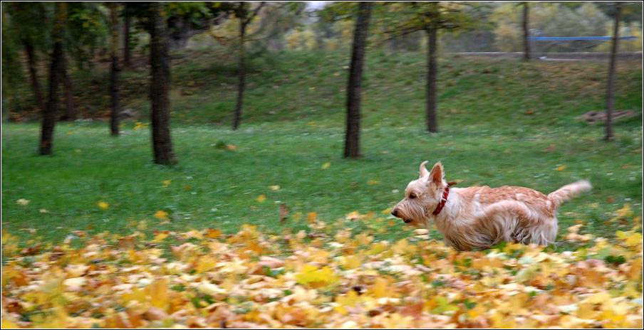 Собака Айка и её осеннее настроение
