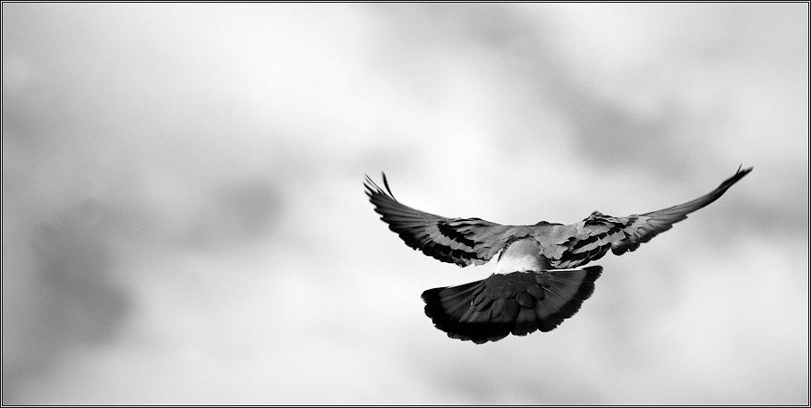 Летит птица