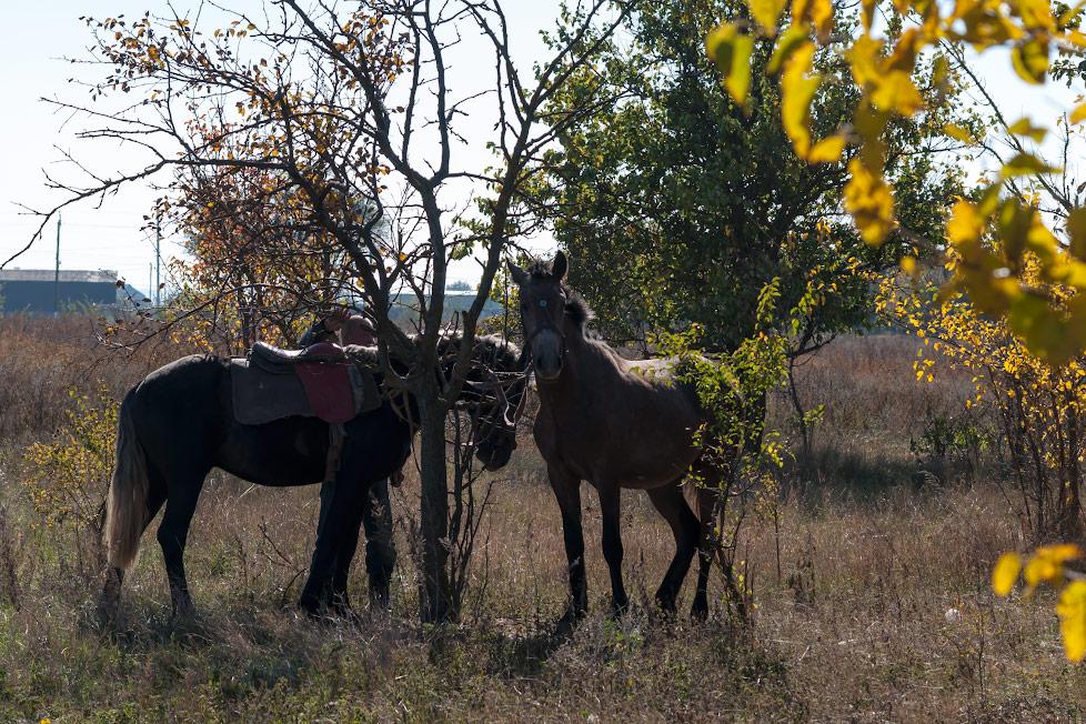 Лошади, кони, спорт - Тирасполь, Приднестровье