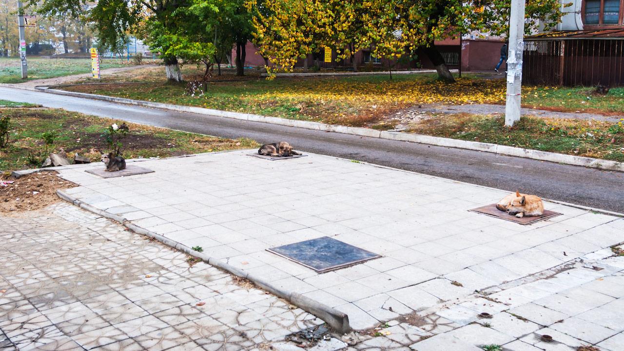 Бездомыне собаки в Тирасполе пытаются согреться