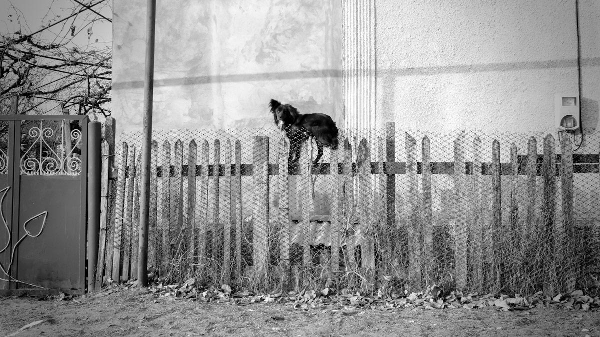 Собака на заборе в селе Варница
