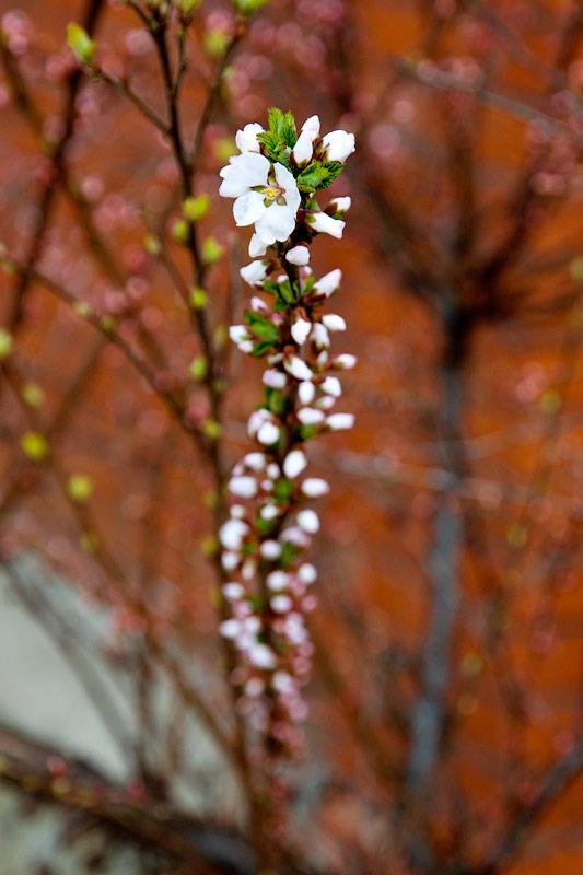 В Тирасполь пришла весна