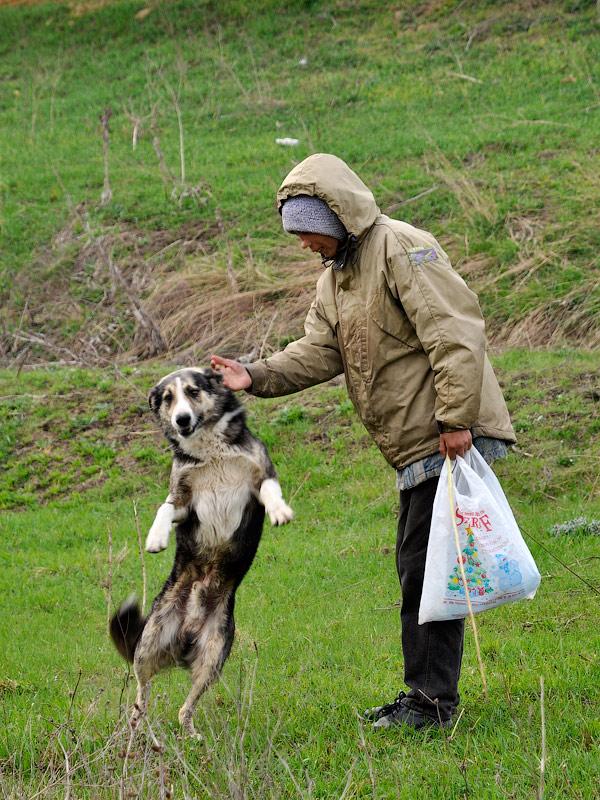 Пастушка и ее собака