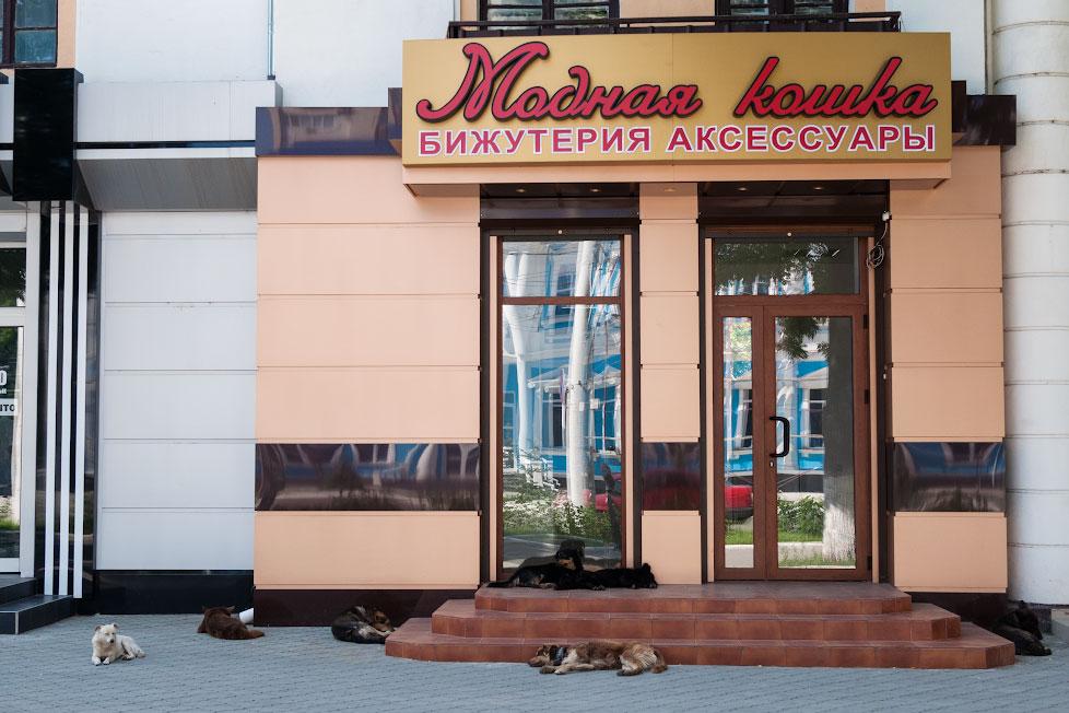 """Собаки на улице, у магазина """"Модна кошка"""" в Тирасполе"""