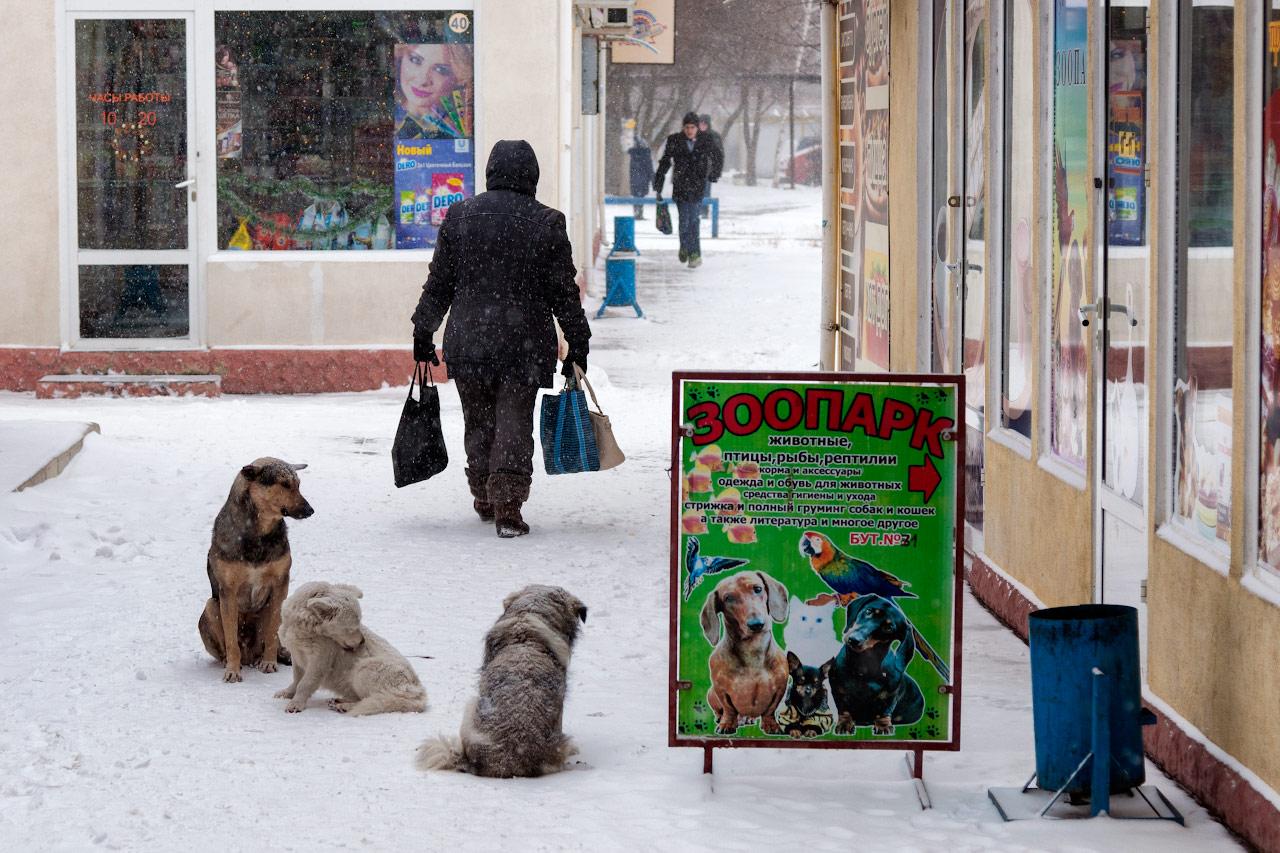 Зима в Тирасполе